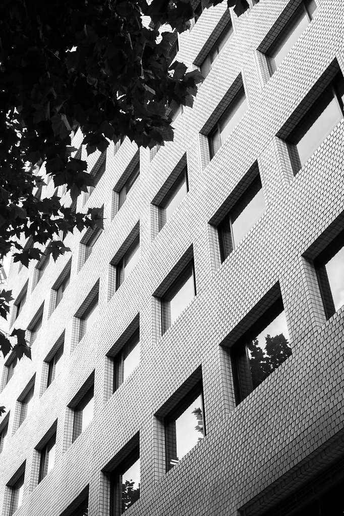 Windows and Leaves